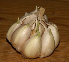 Allium sativum: Garlic head