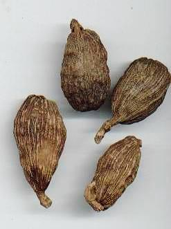 Amomum spec.: Chinese black (brown) cardamom