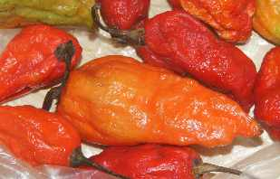 Capsicum chinense: Naga Jolokia Chili (currently the hottest chile of the world,  Tezpur/Assam/India