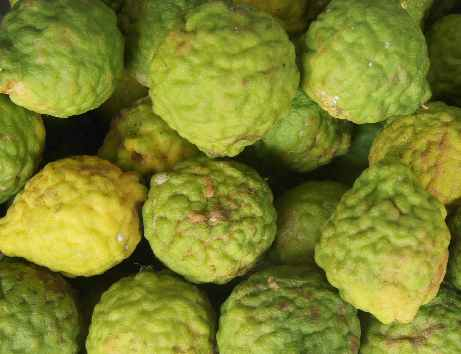 Citrus hystrix: Kaffir limes on a market in Sri Lanka