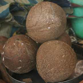 Cocos nucifera: Shelled coconut