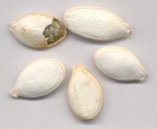Cucurbita pepo: Unshelled pumpkin seeds (Mexico)