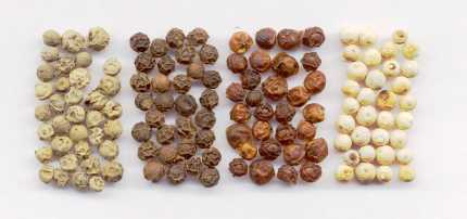 Piper nigrum: Dried peppercorns: Green, black, red and white
