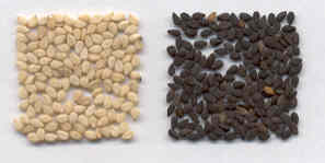 Sesamum indicum: Black and White sesame seeds