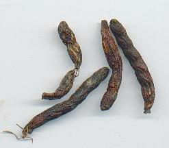 Xylopia aethiopica: Dried negro pepper fruits