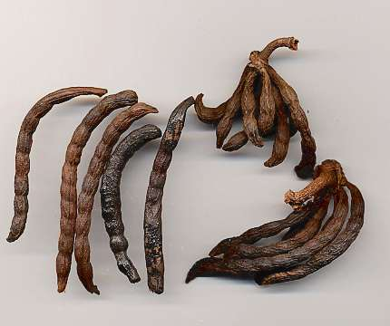 Xylopia aethiopica: Dried kili pepper fruits